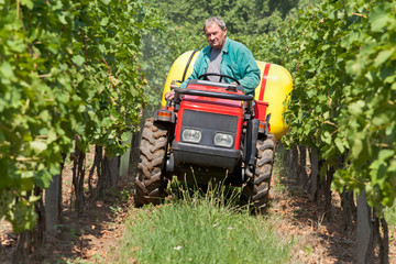 Winemaker done in the vineyard spraying ripening grape against mildew by pesticides. The sprayer is pulled by a small tractor and driving between rows of vine.