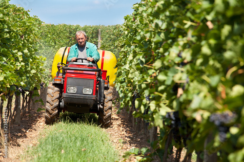 Winemaker done in the vineyard spraying ripening grape against
