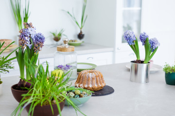Kitchen table, green flowers, cake, quail eggs, white furniture, blooming hyacinth flowers