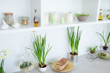 Green flowers in pots, white kitchen furniture.