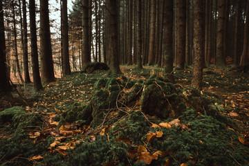 forest floor in autumn