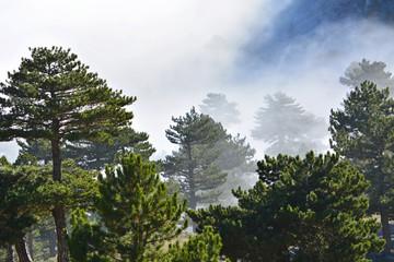 Ormanın İklimi