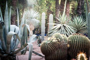 Beautiful cactus plant garden
