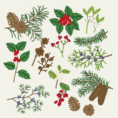 Hand drawn christmas plants. Holly, mistletoe,pine, spruse, juniper, barberry, snowberry, branches and cones, winter berries set. Vector botanical illustration engraved.