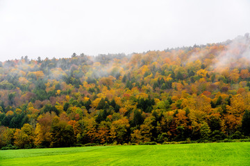 Foggy Autumn Day in New England