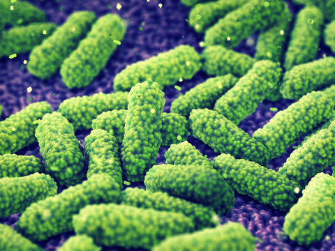 Gut bacteria, Intestinal flora health