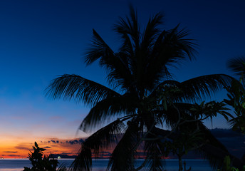 Silhouette coconut palm trees over blue sea sky background at dusk