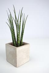 Succulant plant in a square concrete pot