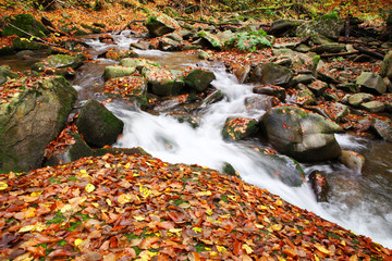 Brook in a beech forest in autumn