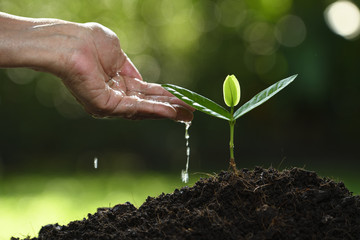 Human's hand watering a young plant on nature background