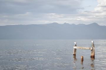 Reflejo de pajaros en el lago