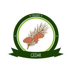 Cedar. Branch, cone. Sketch. Logo, sticker, emblem