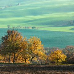 Landscape with waves hills, green fields and  trees, South Moravia