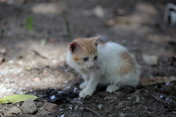 red kitten outdoors in africa