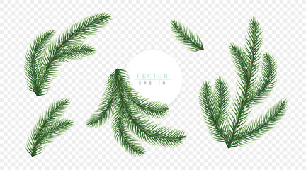 Realistic green Christmas tree branches isolated on transparent background, can be used for decoration of greeting cards, flyers and christmas posters. Vector illustration