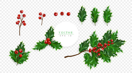 Holly berry symbol of Christmas isolated on transparent background, can be used for decoration of greeting cards, flyers, invitations and christmas posters. Vector illustration
