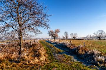 Słoneczny poranek z przymrozkiem i szronem, Podlasie, Polska