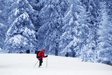 Backpacker go on snowy slope in snow-covered magic forest
