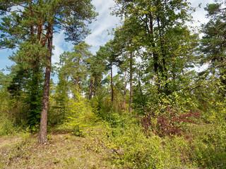 Muschelkalkfelsen und Naturschutzgebiet Hammelberg bei Hammelburg,  Landkreis Bad Kissingen,  Unterfranken,Franken, Bayern, Deutschland