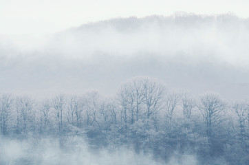 Misty winter forest in the morning