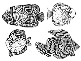 Coloring Page. Coloring Book. Colouring picture with collection of tropical fishes. Antistress freehand sketch drawing