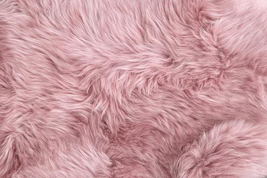 Pink sheep fur Natural sheepskin background texture