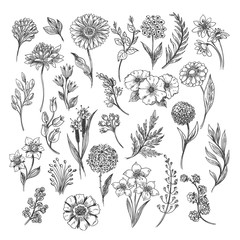 Fototapeta Botanical hand drawn sketch. Vector vintage illustration of floral, leaf and herb set isolated on white background