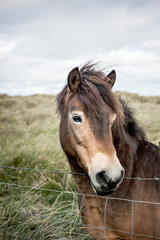 A pony in a field