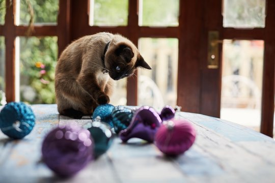 Cat playing with Christmas decorations