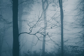 Mysterious forest with blue fog