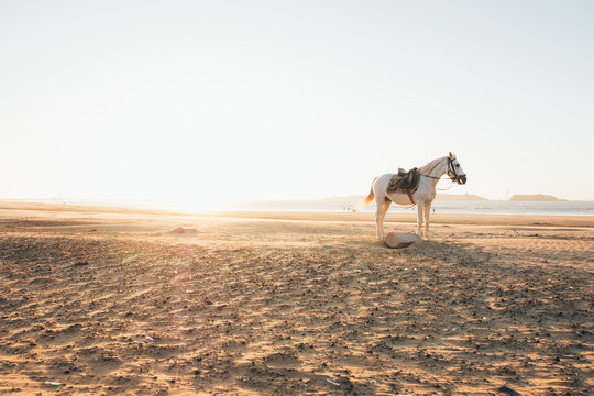 White horse on the beach at the sunset