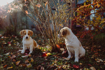 Little Dogs in Nature