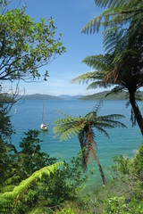 Neuseeland Bucht und Strand mit türkis blauem Wasser