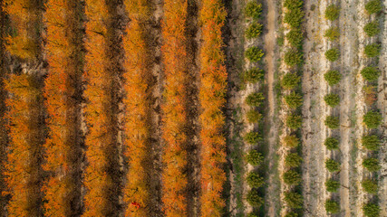 Aerial view of a countryside at autumn season