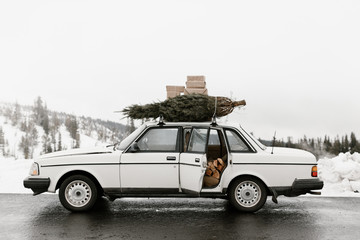 car ready for the holidays with tree and brown packages on top and firewood in the back seat