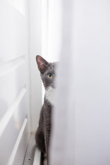 Young cat hiding behind a curtain