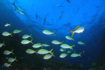 Fish school on coral reef underwater