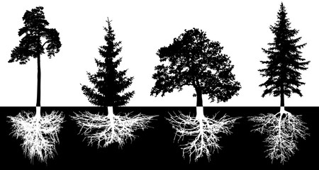 Set of trees with roots, vector silhouette. Forest trees, pine, fir-tree, spruce, oak