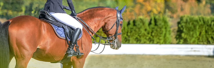 Keuken foto achterwand Paardrijden Beautiful girl on sorrel horse in jumping show, equestrian sports. Light-brown horse and girl in uniform going to jump. Horizontal web header or banner design. Copy space for your text.