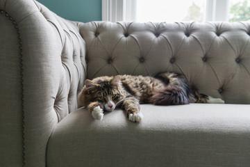 cat snoozing on sofa