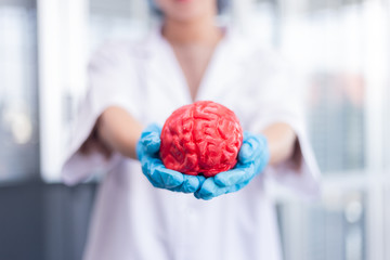 women surgeon holding human brain model.