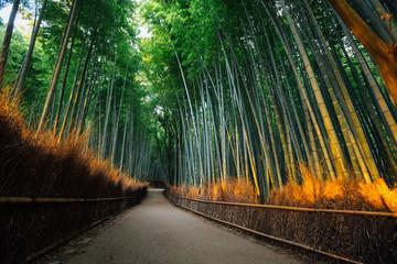Wall Mural - The Bamboo Forest of Arashiyama, Kyoto