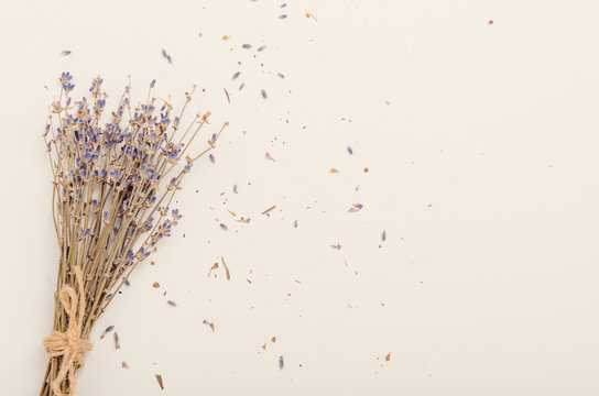 A bunch of dry lavender on a white background. Copy space, top view, flat lay