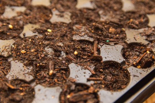 Seed Planter; Starter Seeds; Soil Starter