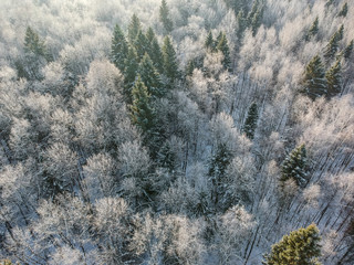Winter forest on a cold sunny morning