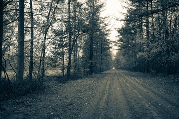 Road through a forest in black and white