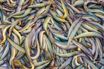 Fresh fish on background