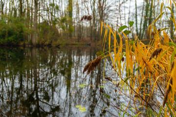 Roseaux d'étang à la fin de l'automne à la fraîcheur du matin
