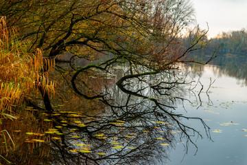 Arbres immergés dans l'eau de l'étang à la fraîcheur du matin en Moselle