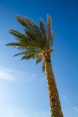 one palm tree